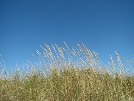 beach-962536_1920